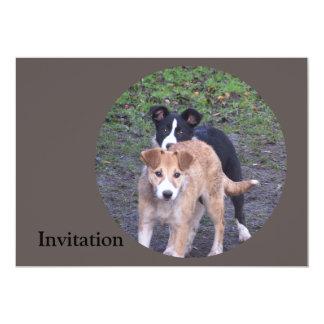 - Border Collies - Tipper/Dixie pups Card