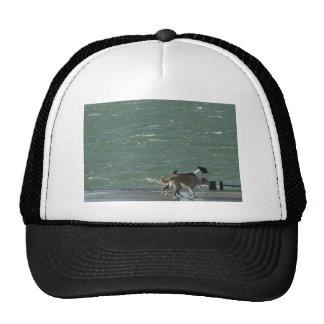 Border Collies - Walking Trucker Hat