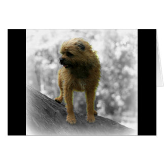 Border Terrier, Blank Greeting Card