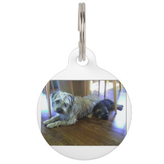 Border_Terrier_brothers2 Pet Name Tag
