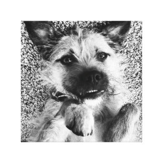 Border Terrier Canvas - I'm So Cute