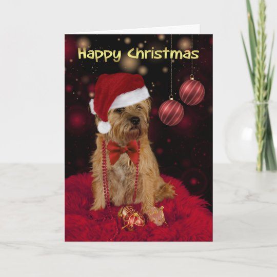 border terrier dog in a santa hat happy christmas holiday