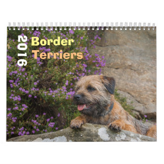 Border Terrier Dog, Medium, White Calendar
