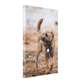 Border Terrier On The Beach With Ball Canvas