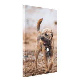 Border Terrier On The Beach With Ball Canvas