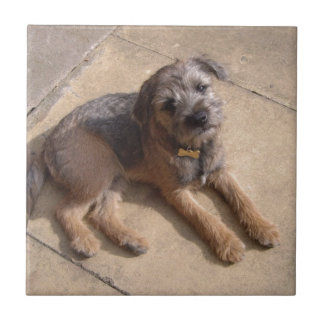 Border Terrier Puppy Ceramic Tiles