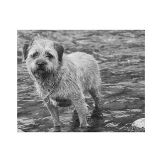 Border Terrier Wall Art Value Wrapped Canvas