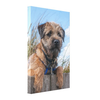 Border Terrier Wrapped Canvas