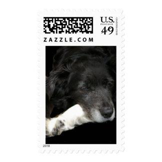 Bordercollie Stamp