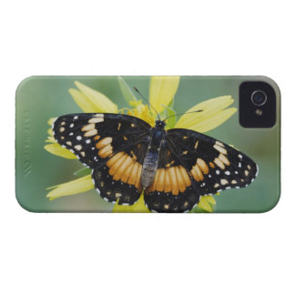 Bordered Patch, Chlosyne lacinia, adult on Case-Mate iPhone 4 Cases