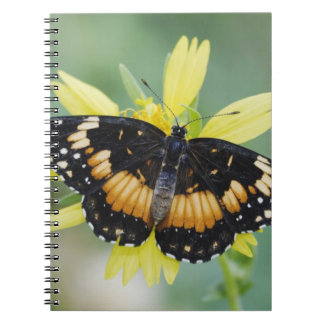 Bordered Patch, Chlosyne lacinia, adult on Spiral Notebook
