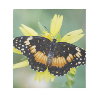 Bordered Patch, Chlosyne lacinia, adult on Memo Note Pads