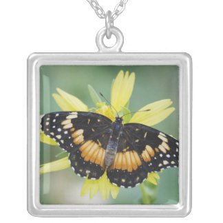 Bordered Patch, Chlosyne lacinia, adult on Silver Plated Necklace