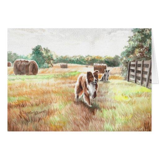 Borderes collies - perros de la granja felicitación
