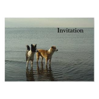 """Borderes collies - volquete/Dixie en el mar Invitación 5"""" X 7"""""""
