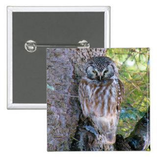 Boreal Owl Closeup Photo Pinback Button