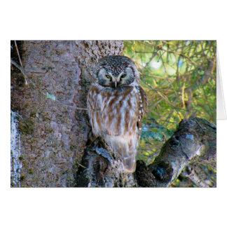 Boreal Owl Closeup Photo Card