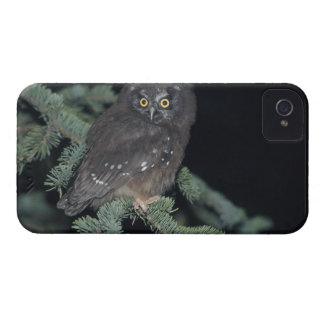 Boreal Owl on Branch iPhone 4 Case-Mate Case