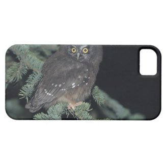 Boreal Owl on Branch iPhone SE/5/5s Case