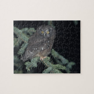 Boreal Owl on Branch Jigsaw Puzzle