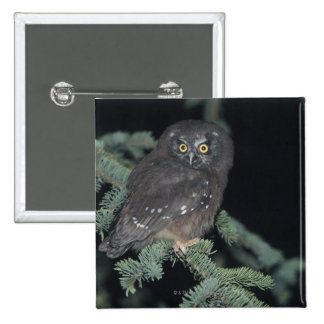 Boreal Owl on Branch Pinback Button