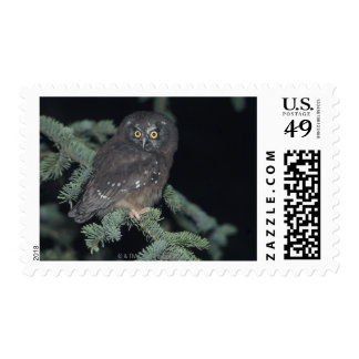 Boreal Owl on Branch Postage