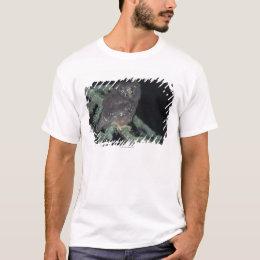 Boreal Owl on Branch T-Shirt