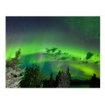 Borealis de la aurora sobre bosque boreal tarjeta postal