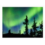Borealis intensos de la aurora sobre taiga de la tarjetas postales