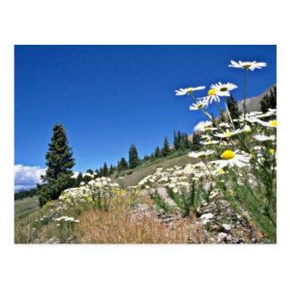 Boreas Pass Breckenridge U S A flowers Post Cards