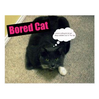 Bored Cat Postcard