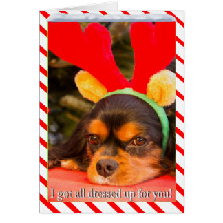Bored King Charles Spaniel Raindeer Christmas Card