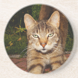 Bored Kitty Cat Beverage Coasters