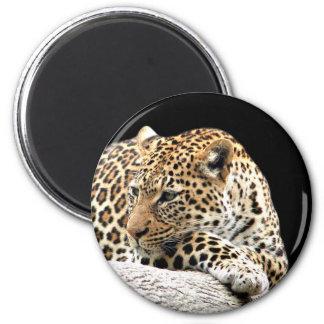 Bored leopard magnet