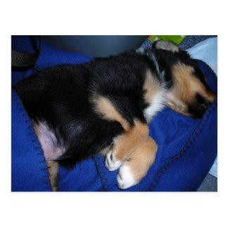 Bored sleepy puppy postcard