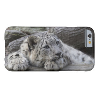 Bored Snow Leopard Cub Barely There iPhone 6 Case