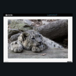 "Bored Snow Leopard Cub Laptop Skin<br><div class=""desc"">Bored Snow Leopard Cub</div>"