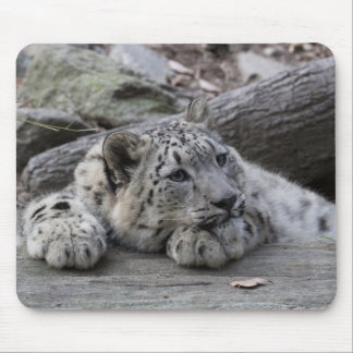 Bored Snow Leopard Cub Mouse Pad