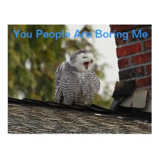 Bored Snow Owl Postcard