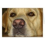 Boredom - Cute Yellow Labrador Greeting Card