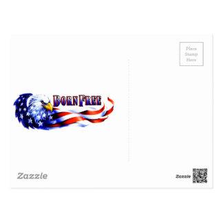 Born Free Bald Eagle And USA Flag Post Card