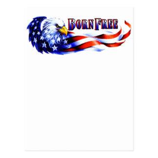 Born Free Bald Eagle And USA Flag Postcard