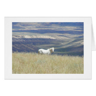 Born Free Mustang Horse Greeting Cards