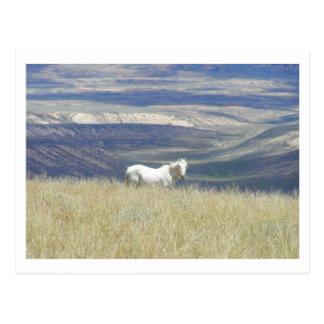 Born Free Mustang Horse Postcard