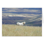 Born Free Wild Mustang Horse Greeting Card