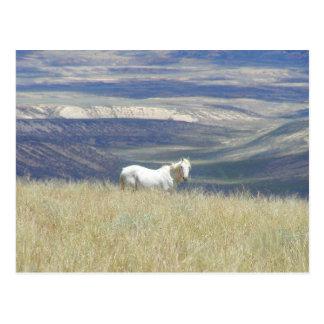 Born Free Wild Mustang Horse Postcard