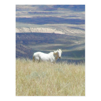 Born Free Wild Mustang Horse Postcard