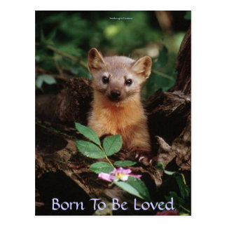Born To Be Loved Postcard