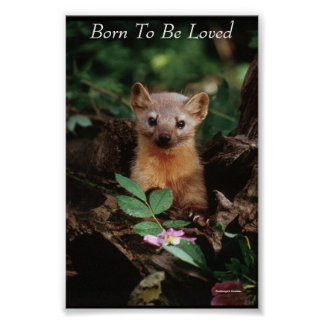 Born To Be Loved Poster