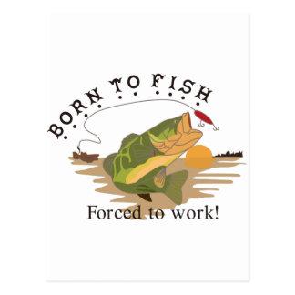 Born to Fish Postcard